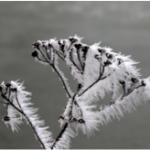 winter shot for David Feakes